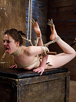 Sweet brunette gets hogtied, suspended and violated
